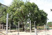 Park na náměstí na Balabence.