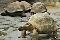Modrý sostatními obyvateli Pavilonu velkých  želv.