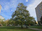 Stromy republiky - Novodvorská.