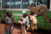 Toulavý autobus v městečku Messamena před zahájením své oficiální první jízdy. Zdobí ho nejen obrázky goril, ale například i bongů.