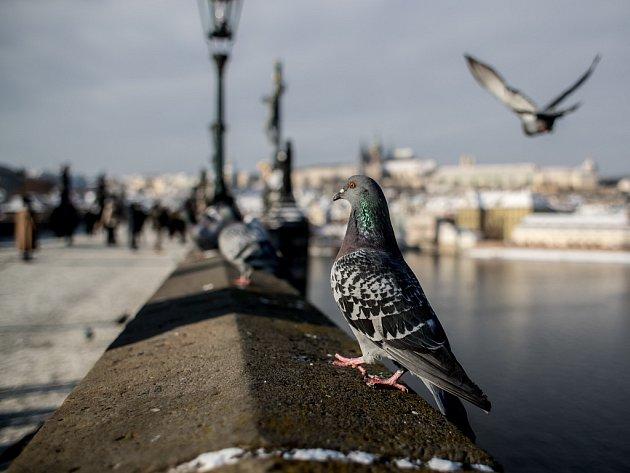 Zima v Praze.