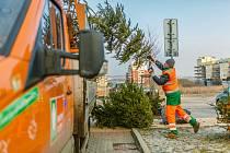 Likvidace vánočních stromků. Ilustrační foto.