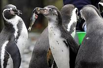 BUDE NA RYBY. Místo sázkaře se mohou radovat tučňáci.
