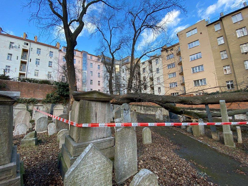 Strom spadl na starý židovský hřbitov.