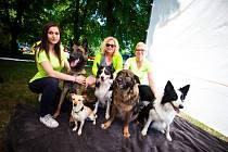 Asistenční psi pomohou lidem smentálním postižením