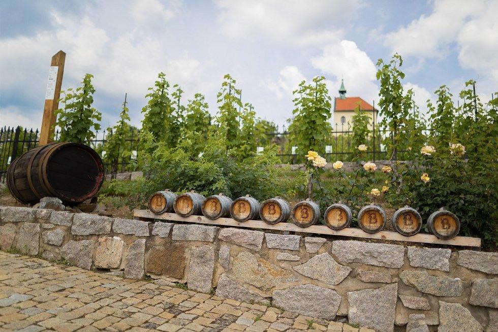 Vinařská stezka v pražské botanické zahradě.