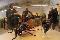 """V pražském Národním muzeu byla 14. prosince zahájena výstava """"Zpívající hmyz""""."""