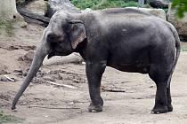 Zoo Praha - slon