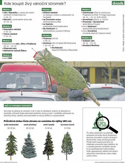 Kde koupit živý vánoční stromeček?