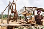 """Luskouni, kteří jsou díky svým šupinám občas přirovnáváni k """"oživlým smrkovým šiškám"""", žijí v jižní Asii a v Africe"""