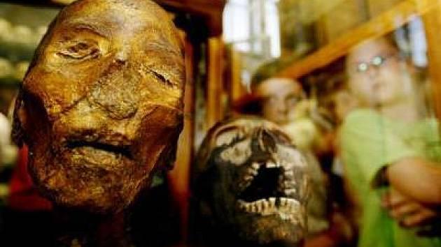 V pořadí již čtvrtá Pražská muzejní noc proběhla v sobotu 16. června 2007 od sedmé hodiny večerní do jedné hodiny po půlnoci. Fotografie pochází z Hrdličkova muzea člověka UK - Viničná 7, Praha 2.