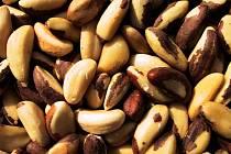 Celníci zadrželi 16 tun zdravotně závadných para ořechů z Bolívie.