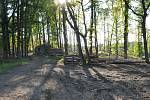 Kůrovcová kalamita v posázavských lesích