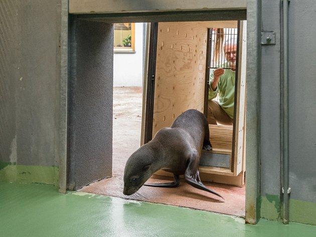 Samička Ronja dorazila do Zoo Praha ve čtvrtek 27. 10.
