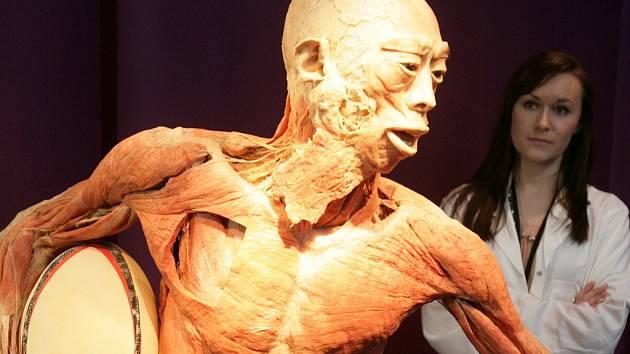 Výstava Body The Exhibition. Ilustrační foto.