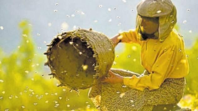 Země medu. Přehlídku otevře film o včelařce v horách.