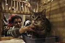 Kongresové centrum hostilo o víkendu třináctý ročník umisťovací výstavy opuštěných koček.