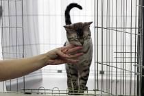 Mezinárodní dvoudenní valentýnská výstava koček,kterou pořádá Český svaz chovatelů. Hotel Olympik Artemis.