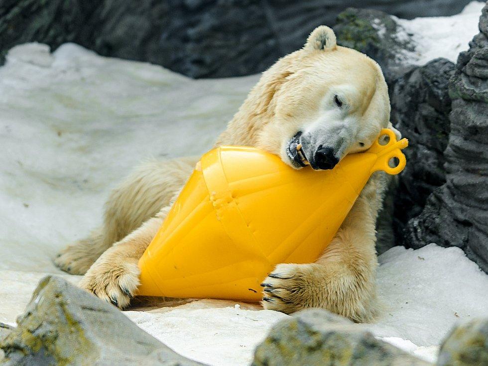 Nové prvky a vjemy stimulují fyzickou a mentální aktivitu zvířat. Lední medvědi si ve vodě i na souši rádi hrají sbarely nebo bójkami. Napodobují díky nim stejné pohyby jako při prorážení ledu nebo lovu tuleňů.