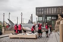 Modely žraloka bílého a plejtváka malého se přestěhovaly do historické budovy Národního muzea.