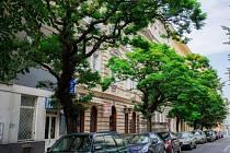 Stín a příjemné prostředí si chválí obyvatelé Belgické ulice v Praze na Vinohradech. Bojí se ale, že Technická správa komunikací téměř půlkilometrovou alej kvůli rekonstrukci pokácí.