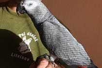 Papoušek Žako. Ilustrační foto.