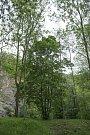 Stromy republiky - Šárka.