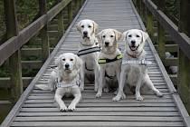 Vodící psy se připravují na výcvik bez stresu