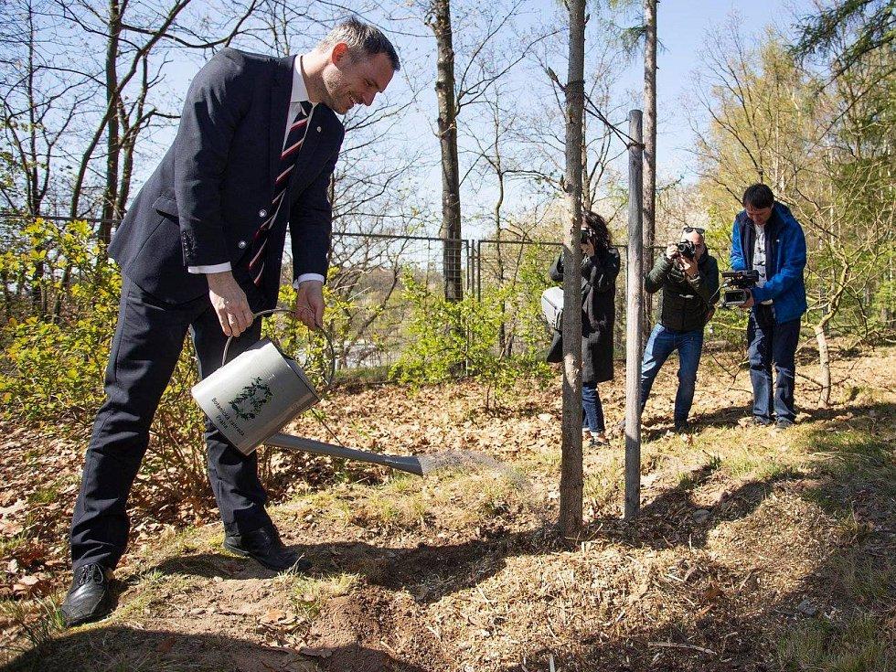 Zdeněk Hřib (Piráti) zasadil strom. V trojské botanické zahradě se stal pátým primátorem, který se zapojil do projektu Kořeny osobností.