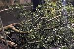 V Praze zasahovali hasiči nejčastěji u popadaných stromů.
