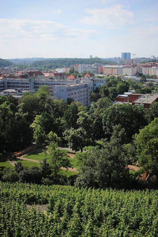 Výhled na Prahu zpestřují vinice.