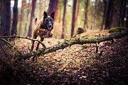 Pes Cannibal pomohl dopadnout zloděje