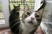 NE, NENUDÍME SE! V hotelu pro kočky v pražských Kobylisích se o vašeho miláčka určitě postarají.
