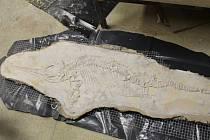 Odlitek fosilie Ichthyosaura - příprava pro montáž na fasádu budoucí galerie.