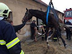 Kůň se zranil, když uklouzl na ledu.