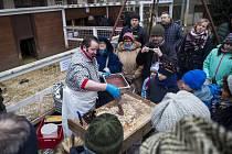 před pražským zemědělským muzeem konala akce Letenské prase