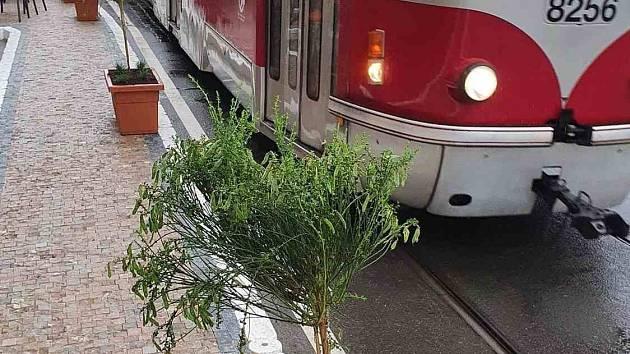 Nové řešení částečně uzavřeného Smetanova nábřeží, kdy betonové zátarasy nahradily květináče se stromky, vyvolává úsměvné reakce.