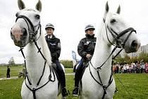 Prezentace dvojice starokladrubských běloušů, která posílila Městské policie v Praze, se uskutečnila 12. září v Praze.