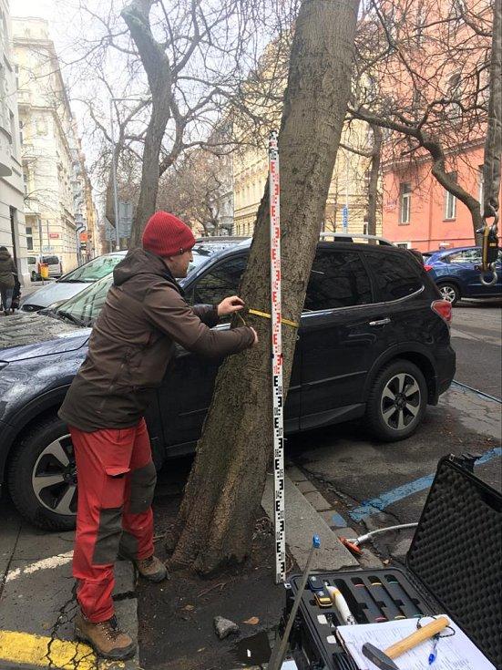 Zkouška provozní stability stromů v Lužické ulici.