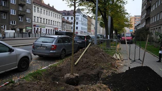 Sázení stromů v Sokolovské ulici.