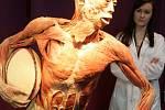 V Křižíkově pavilonu na Výstavišti začala výstava exponátů připravených z lidských těl.