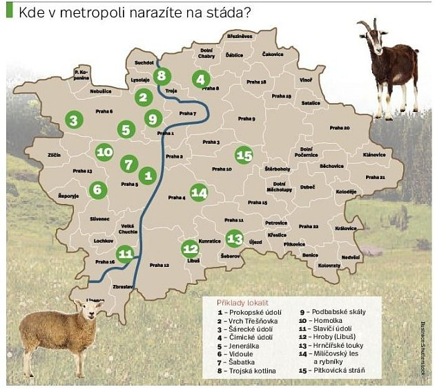 Kde se pasou stáda ovcí a koz vPraze. Infografika.
