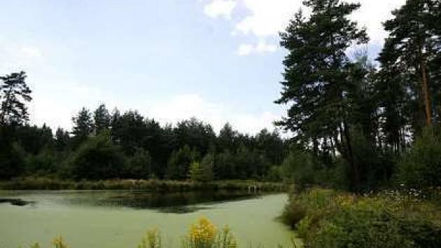 Klánovický les, jehož část, by měla ustoupit plánované výstavbě golfového hřiště.