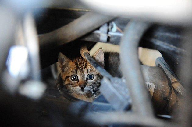 Kotě uvízlo vmotoru
