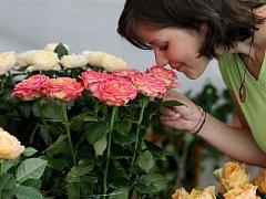 Prodejní výstava Královna květina - růže.
