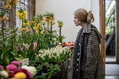 Výstava jarních květin v Empírovém skleníku Pražského hradu.
