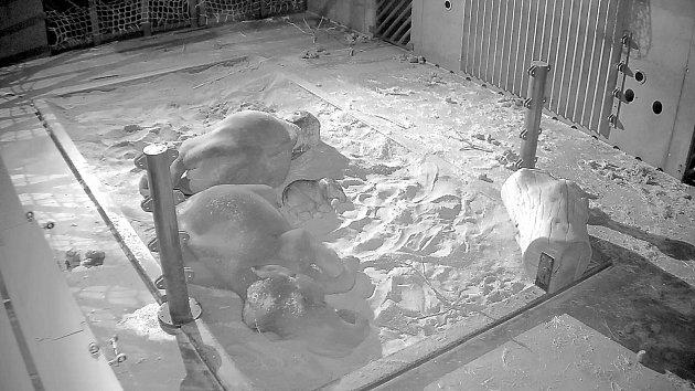 Slůňata v Zoo Praha