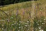 Pastviny v Praze pomáhají návratu motýlů.