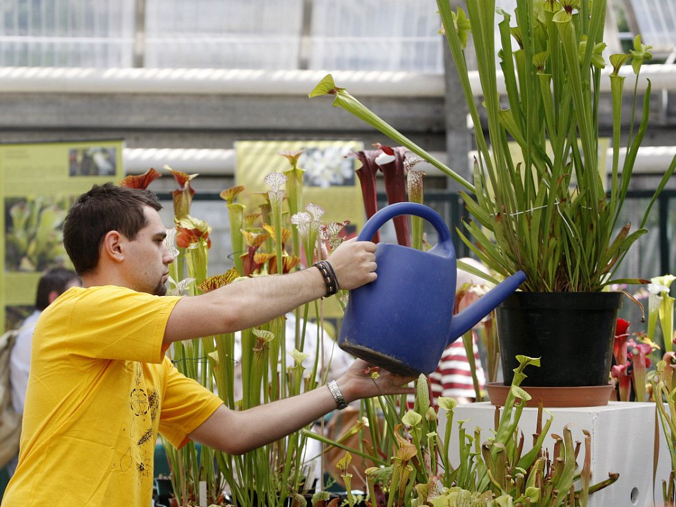 Devátý ročník výstavy masožravých květin začal 15. června v horním skleníku Botnické zahrady Přírodovědecké fakulty UK v centru Prahy.