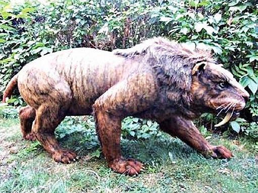 Šavlozubý tygr patří k nejmenším exponátům výstavy.